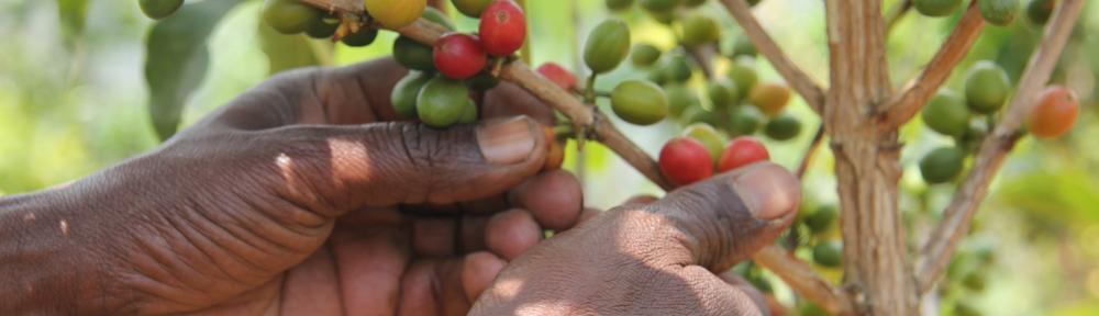 Ruanda | Kaffee und Freundschaft