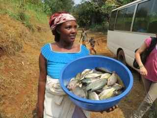 Frische Fische aus dem Kivusee